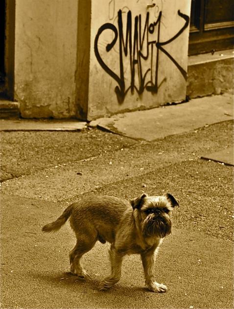 El grafitero